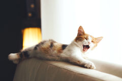 Cat sleeps at home Royalty Free Stock Image