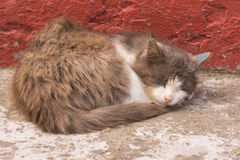 Cat sleeps at home foundation. Footage from a simple farmer's rural life Royalty Free Stock Images