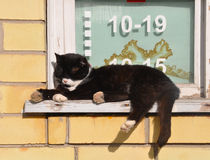 Cat sleeps near store. Black cat sleeps on the windowsill store Royalty Free Stock Photos