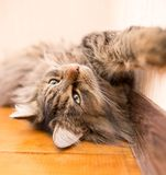 The cat sleeps near the wall in the room.  Royalty Free Stock Image