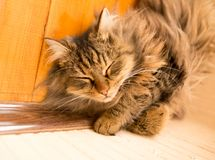 The cat sleeps near the wall in the room.  Royalty Free Stock Photo
