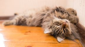 The cat sleeps near the wall in the room.  Stock Photo