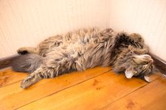 The cat sleeps near the wall in the room.  Stock Image