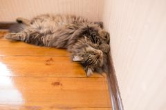 The cat sleeps near the wall in the room.  Stock Images
