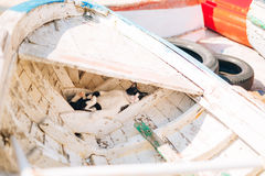 The cat sleeps in an old destroyed wooden boat in Perast, Monten Stock Photo