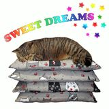 Cat sleeps on a pile of pillows 2 stock photo