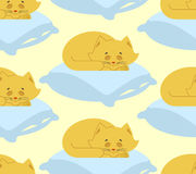 Cat sleeps on pillow seamless pattern. Sleeping kitten ornament. Pet background Royalty Free Stock Image
