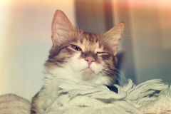 Cat sleeps Stock Photos