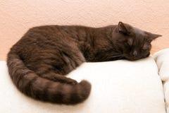 Cat sleeps on sofa Stock Image