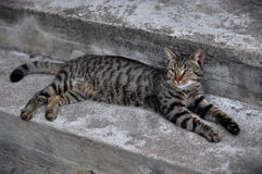 Cat is sleeps on the stairs Royalty Free Stock Image