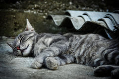 Cat sleeps. On the street Stock Images