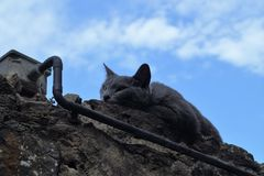 Cat sleeps on the wall. A cat sleeps on the wall. Behind a blu sky with soft clouds Stock Image