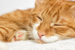 Cat sleeps Stock Photos