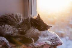The cat sleeps on the window, stock photo