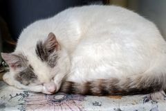 A cat sleeps on the yard table stock image