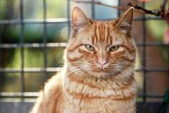 Sweet Cat Stock Image