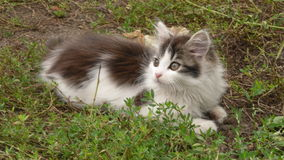 Cat. Small cat sitting on the grass royalty free stock photography