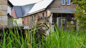 Cat Small Smart Nice Pet Gras. This a very clever pet stock images