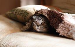 Cat, Small To Medium Sized Cats, Cat Like Mammal, Eye royalty free stock photo