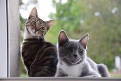 Cat, Small To Medium Sized Cats, Cat Like Mammal, Fauna stock image