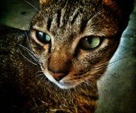 Cat face. Royalty Free Stock Photos