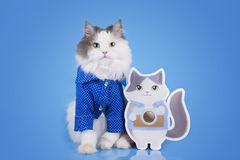 Cat in a smart shirt and his double on a blue isolated backgroun Stock Photo