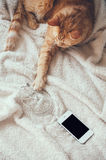 Cat and smartphone Stock Photography
