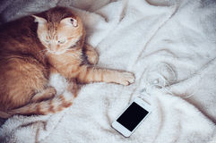 Cat and smartphone Royalty Free Stock Photography