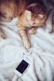 Cat and smartphone Royalty Free Stock Images