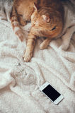 Cat and smartphone Stock Image