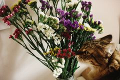 Cat smelling colorful amazing wildflowers in vase on background. Of rustic room stock image