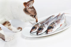Cat smelling a fish on the table. Royalty Free Stock Image