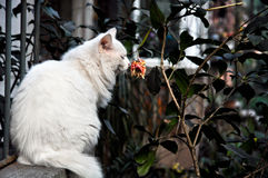 Cat is smelling flower Stock Image