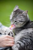 Cat smelling a flower Royalty Free Stock Images