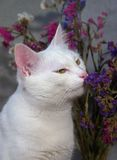 Cat smelling the flowers Royalty Free Stock Photos
