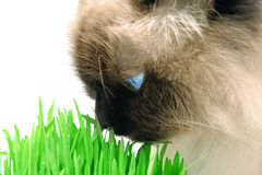 Cat smelling a green grass Stock Photos