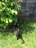 Cat Smelling a Leaf. Cutie the cat smelling a leaf royalty free stock image