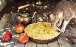 Cat smelling a peach pie on wooden table Royalty Free Stock Image