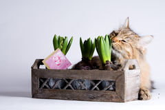 Cat is smelling a plant Royalty Free Stock Photo