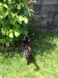 Cat Smelling una foglia Immagine Stock Libera da Diritti