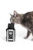 Cat smelling vintage camera Royalty Free Stock Photography