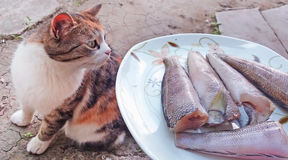 The cat smells fish. Cat loves fish, smells and wants to taste it Royalty Free Stock Images