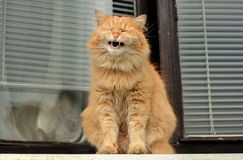 Cat smiles on the balcony Royalty Free Stock Photo
