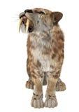 Cat Smilodon grande foto de archivo libre de regalías