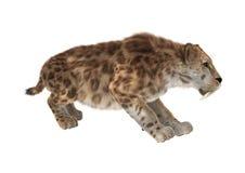 Cat Smilodon grande Imagem de Stock