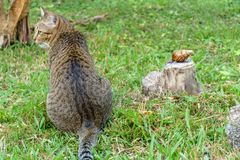 Cat and snail Stock Images