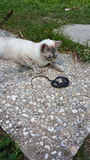 Cat & Snake. Cat caught a snake to show her mama Royalty Free Stock Image