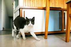 Cat sneaking in kitchen Royalty Free Stock Photography