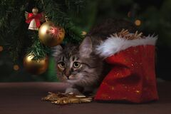 Cat sneaking under Christmas tree