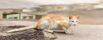 Cat sneaks. Small Cat sneaks on floor Stock Images
